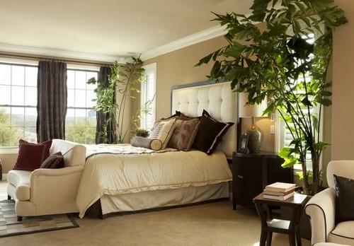 plantas en aposento de dormir